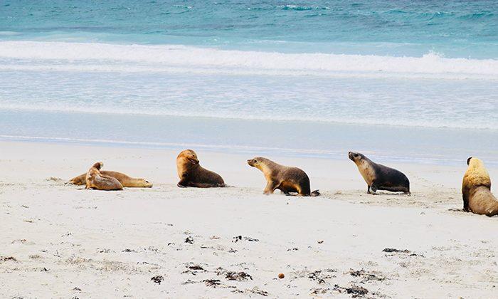 kisland-seals-robinesrock