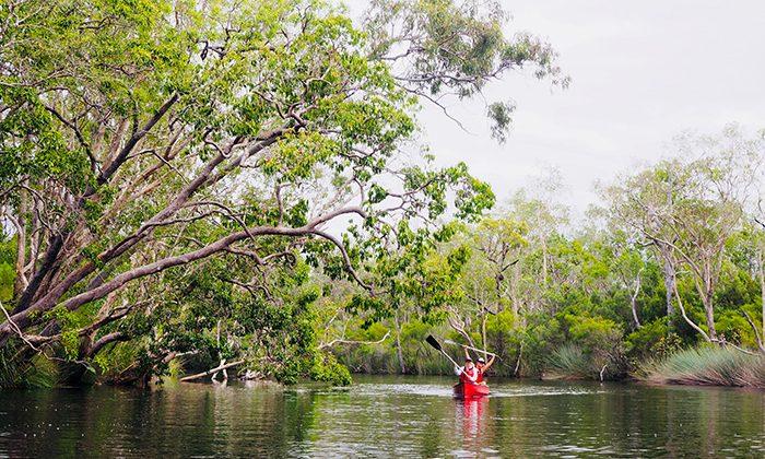 noosa-canoepaddle-robin-esrock