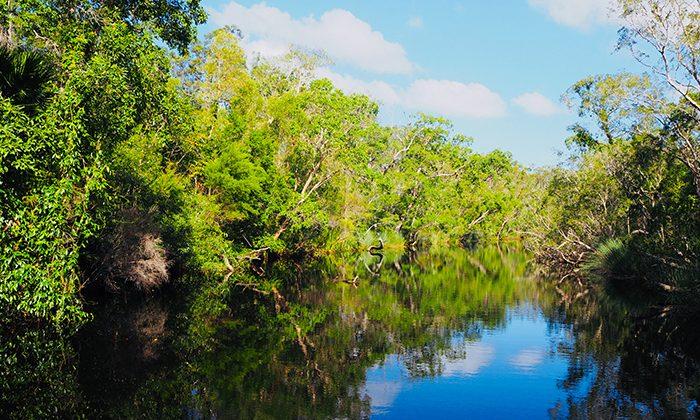 noosa-river-robin-esrock