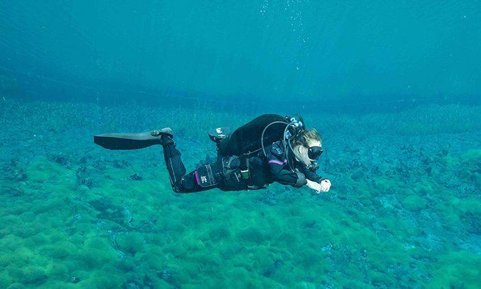 ponds-ewens--photo-courtesy-Reef-2-ridge