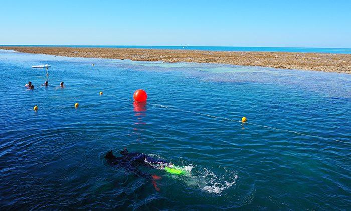 reefsleep-snorkel--robin-esrock