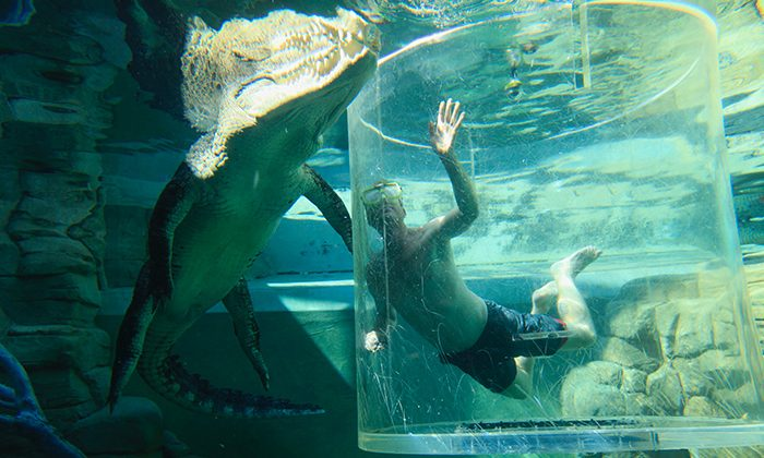 Croc-hand-Photo-by-Paige-Mattsson-Courtesy-Crocosaurus-Cove