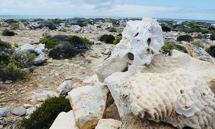 abrolhos-skull---robin-esrock