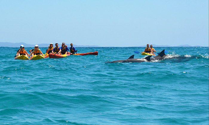 byronkayak-dolphins-Go-Sea-Kayaking