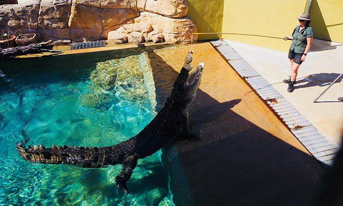 croc-show---robin-esrock