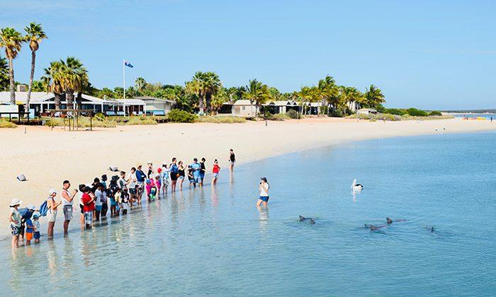 sbay---dolphin-feed---robin-esrock