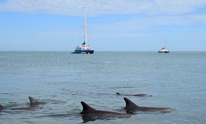 sbay-dolphin-yacht-robin-esrock