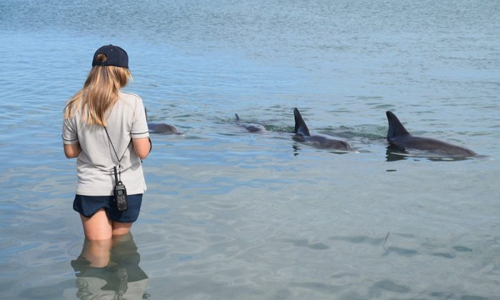 sbay---dolphons