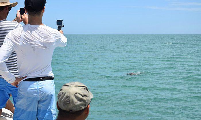 sbay-looking-for-dugong---robin-esrock