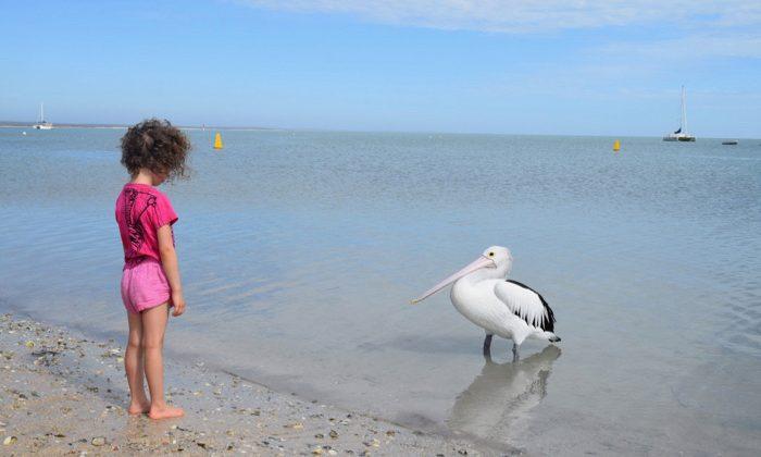 sbay---raquel-pelican