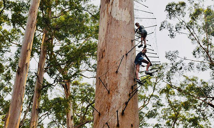 tree---big-tree-climb---robin-esrock