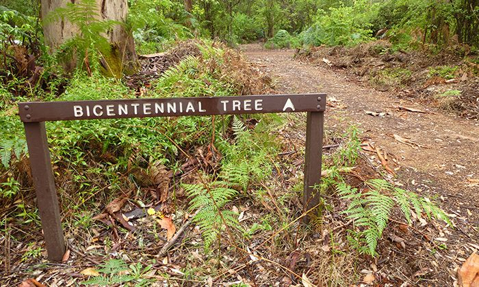 tree--sign---robin-esrock