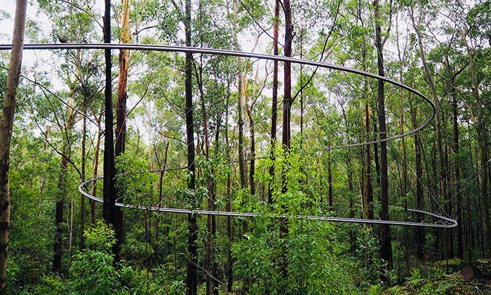treetop-lines-robin-esrock