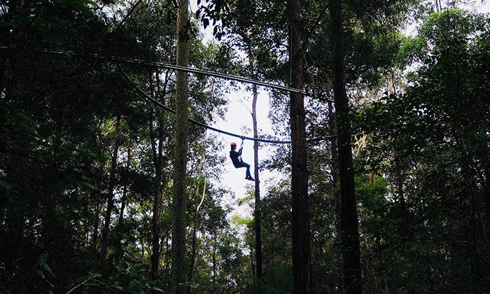 treetop-long-robin-esrock