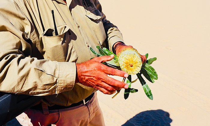 worimi-plant-robinesrock